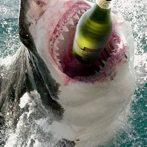 Great-Wine-Shark